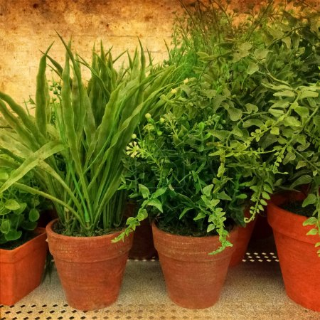 Photo for Green plants in clay pots on rusty background. - Royalty Free Image
