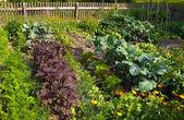 """Постер, картина, фотообои """"Vegetable garden"""""""