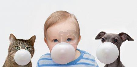 Photo pour Petit garçon, chat et chien fait une bulle de chewing-gum - image libre de droit