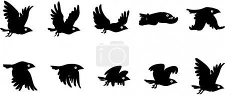 Flying bird sequence...