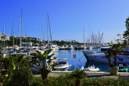 """small harbour in Cannes """"port Canto"""""""
