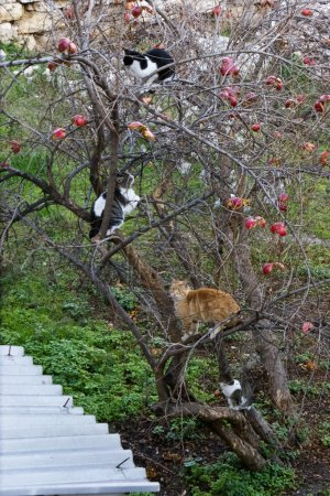 Cats on the tree