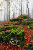 Rocks with moss in autumn forest with fog