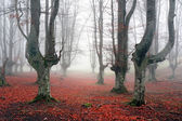 autumnal forest with fog