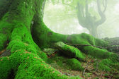 tree roots with moss on forest