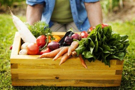 Box filled fresh vegetable