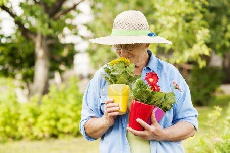 Photo pour Femme âgée sentant les fleurs - image libre de droit