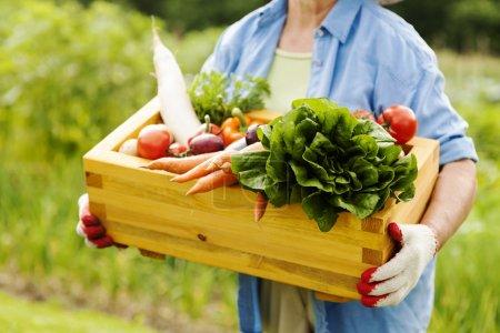 Photo pour Femme âgée tenant boîte avec légumes - image libre de droit