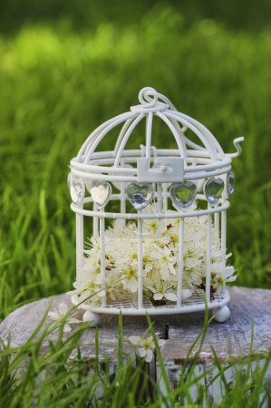 Blooming apple tree flowers in white vintage birdcage
