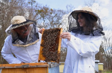 Two beekeepers working in apiary