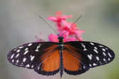 Motýl, hmyz