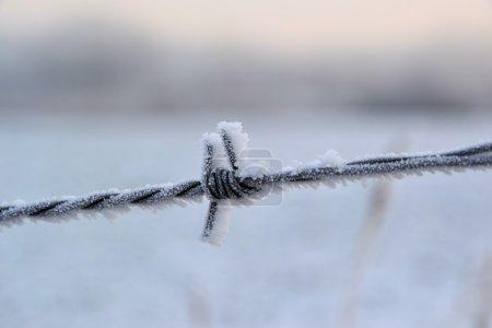 Photo pour Une clôture de fil de fer barbelé en hiver - image libre de droit