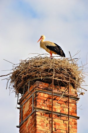 a stork standing in its nest