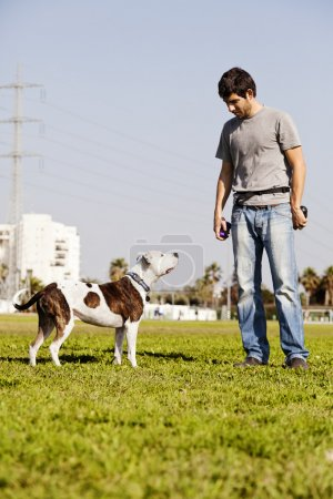 Pitbull and Dog Owner