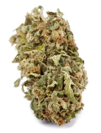 Isolated Cannabis Bud
