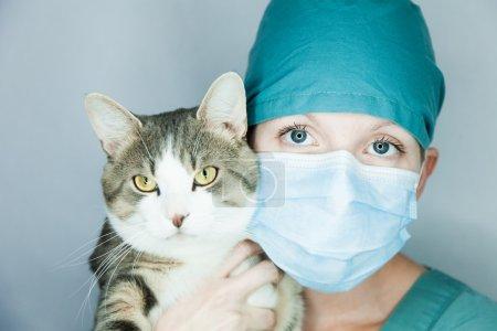 die tierärztliche Katze umarmt