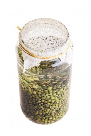 Soaked Sprouting Seeds (green Lentils)