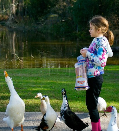Young Girl Feeding Ducks. Pekin Duck makes a Nice Catch of a Piece of Bread.