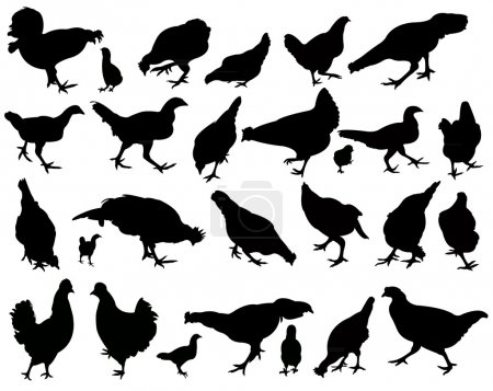 Chickens and roosters, silhouettes vector, collage set