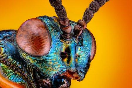 Vista aguda y detallada extrema de la pequeña cabeza de avispa metálica desconocida tomada con el objetivo del microscopio apilado de muchos disparos en una foto muy nítida (La avispa tiene un tamaño corporal de 4mm )