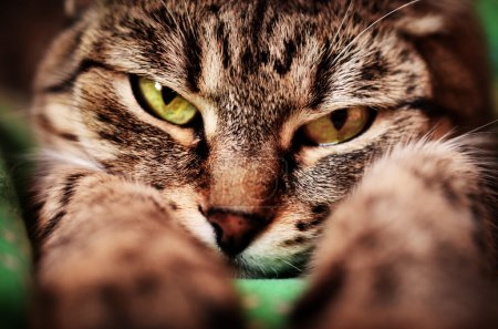 Cat with green eyes on