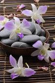 Krásná orchidej a kameny
