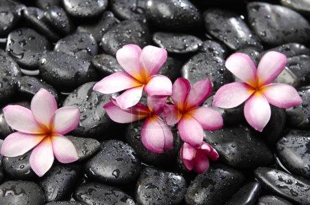 Photo pour Frangipani avec pierres - image libre de droit