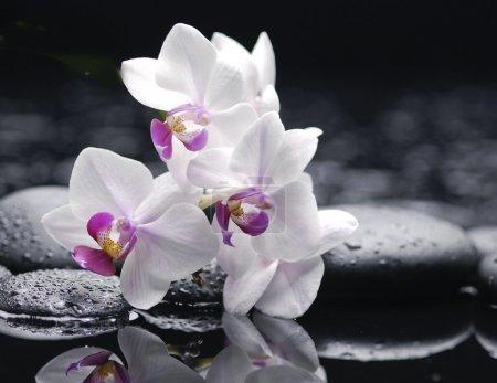 Photo pour Macro de pierres zen et orchidées blanches sur fond humide - image libre de droit