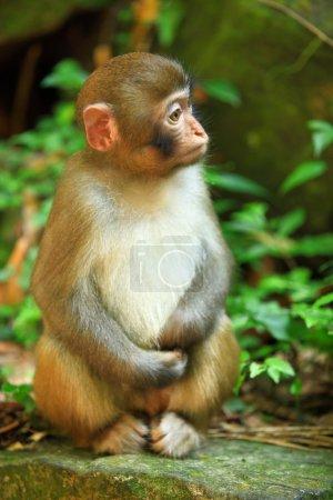 Monkey in forest