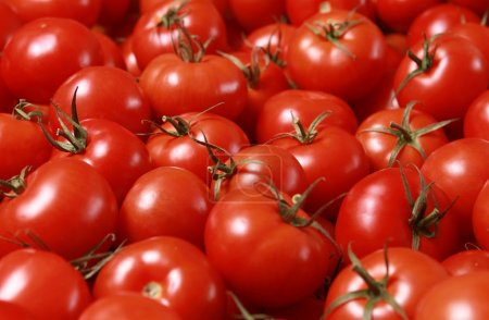 Photo for Fresh red tomatoes (shallow DOF) - Royalty Free Image
