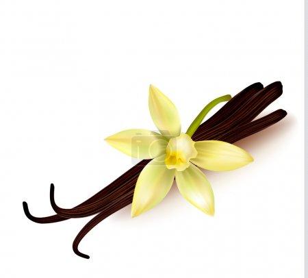 Illustration pour Gousses de vanille et fleur. Illustration vectorielle. - image libre de droit