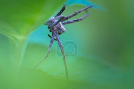 Foto de Primer plano de una araña escondiéndose detrás de una hoja verde - Imagen libre de derechos