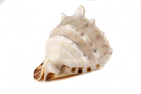 Sink a large clam