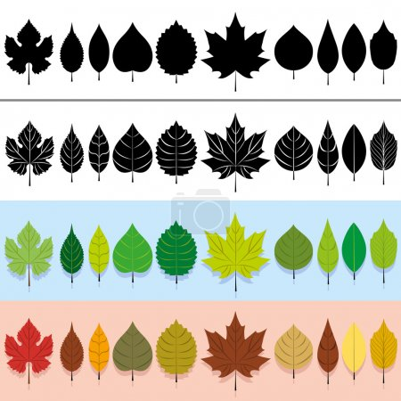 Illustration for A vector set of different types of leaves - Royalty Free Image
