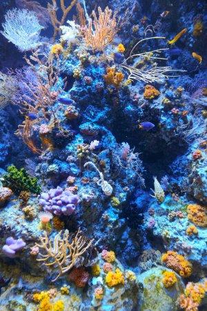 Photo pour Récif corallien - image libre de droit