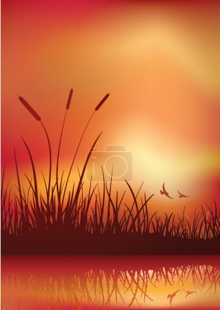 Illustration for Sunset in marshland. Vector illustration. Elements are layered separately in vector file. CMYK color mode. - Royalty Free Image