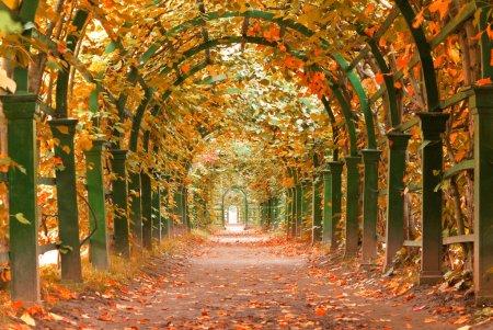 Autumn garden tunnel