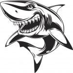 Vector illustration: toothy white shark...