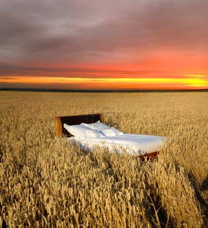Photo pour Lit dans un champ de céréales - concept de bon sommeil - image libre de droit