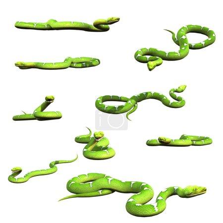 Various python snake poses collection set 3