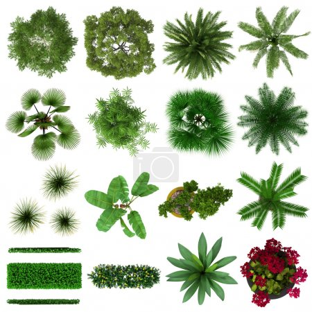 Tropical Plants Collection Top View Isolated on White Background.