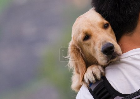 Photo for Dog on a man shoulders - Royalty Free Image
