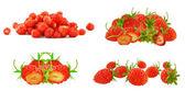 Lesní jahoda