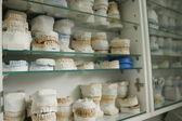 Dentální sádry modely
