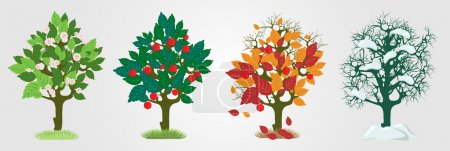 Photo for Seasons trees. Vector illustration - Royalty Free Image