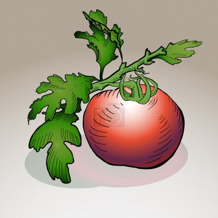 Illustration pour Tomate vectrice. Illustration vectorielle . - image libre de droit