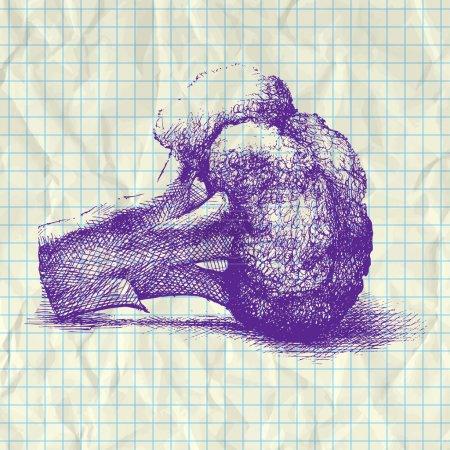 Illustration pour Illustration croquis du chou-fleur sur papier carnet . - image libre de droit