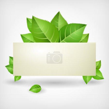 Green leaves. Vector illustration.