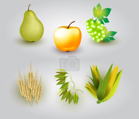 Group of fruit and some ears of wheat. Vector illustration.