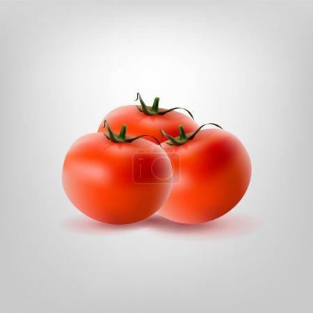 Illustration pour Trois tomates vectorielles, illustration vectorielle - image libre de droit